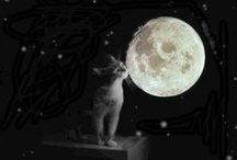 Moonlight shadow / by Silvia Della Libera