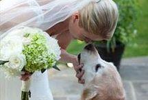 Wedding dogs / by Silvia Della Libera