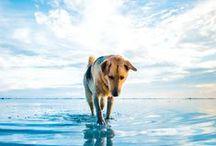 Dogs are forever #2 / Amori della mia vita / by Silvia Della Libera