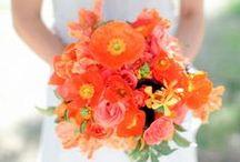 Celosia Orange Wedding
