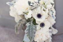 Paloma Wedding