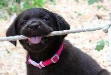 Söta djur som gör mig glad