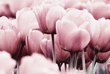 P i n k / pink pink pink
