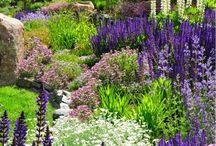 Jardines/garden