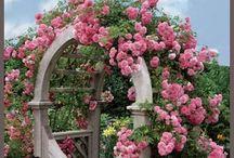 Roser / Rose