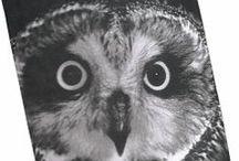Zwierzęce wzory / http://www.bellemaison.pl/ #zwierzecenadruki  #poduszkidekoracyjne  #dekoracjewnadruk #nadrukzwierzecy