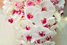 Flowers & Photos