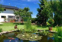 My garden and pond / Garden, pond