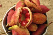 BOTANY ☼ Rare fruit