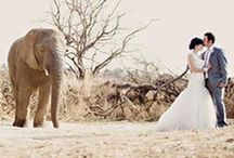 ~ Her Bush Veld Wedding.... / ...what could be more romantic than tying the knot out in the bush veld - one with the animals and nature...Welcome to my board.  Thanks for stopping by.  Please feel free to pin anything you may like.  No Pin Limit.
