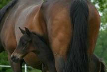 Horses / by Lena Shepard