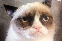 Grumpy Cat Dedication