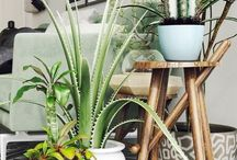 P L A N T S / Ideas of decorating home with plants