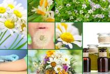 Allergy Relief / Natural remedies and herbal solutions to overcome seasonal allergies. Also pins on food allergies, mold allergies and more!
