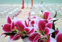 Florida Beach Weddings / Beach wedding on the Florida coast and the gulf coast