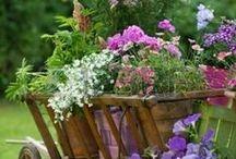 цветы в доме и вокруг