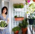 Home: Balcony Planting