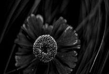 ●《Back to black》●
