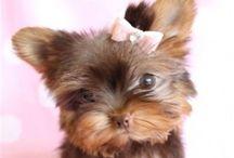Cute pets..