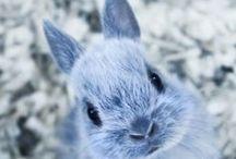 konijnen / by Tessa Boswinkel