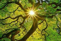 Arboles / #trees #árboles