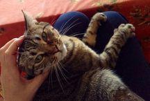 Mya / My lovely cat <3