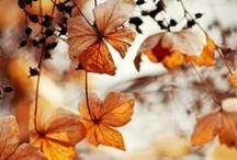 Otoño / #otoño #autumm #fall