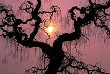 bijzondere bomen