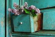 Nature / by Michelle Stodard