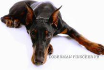 Doberman / by Brenda Casey