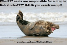 Seal Funnies / Cartoons and funny seal pics