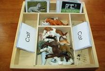 Unit Ideas: Mammals / Educational resources for teaching kids about mammals. / by Katie @ Gift of Curiosity