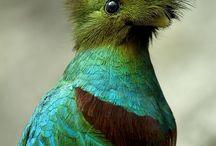 Lo más maravilloso de la naturaleza / Criaturas asombrosas