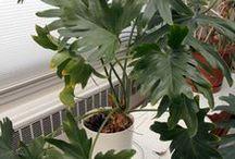 Indoor Gardening  / Best Plants,Tips and Gadgets for Indoor Gardening / by LaTonya Williams