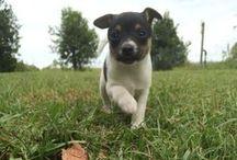 Canine friend