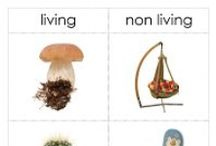 "Unit Ideas: Living & Non-Living / On this board I have curated some of the best free and low-cost resources for teaching kids to understand living and non-living things. On this board I share activities for learning about the characteristics of living things, how living things and nonliving things are different, and also learning to recognize ""once living"" things. / by Katie @ Gift of Curiosity"
