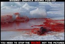 Canadian seal hunt / This board contains graphic images highlighting the barbarity of the Canadian seal hunt. For more information, petitions and how you can help us fight this nonsense, refer to our website www.thesealsofnam.org or find us on Facebook www.facebook.com/thesealsofnam