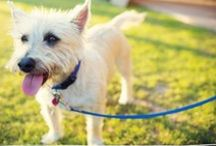 Dog Friendly Places - Ohio / Places to enjoy with your fur-babies!