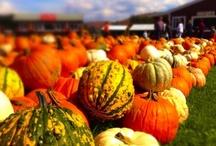 Pumpkinville Fall Photos