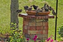 Gardening & Backyard Inspiration
