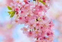 Flowers / by Janine Loescher