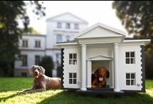 A Dog's Dream / Do dogs dream about their houses? Find inspiring ideas for building creative dog houses. #Dogs #Dog #Puppy #Puppies #DogHouse #RockysACE rockys.com