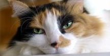 Pawsitively Purr-fect / Give your cat the best love and care possible! #Cat #Cats #Kitty #Kitties #Kitten #RockysACE rockys.com