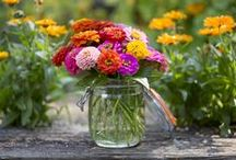 Zinnias / Vibrant colour for your garden – and they make great cut flowers / by BBC Gardeners' World Magazine