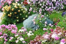 My Garden / So much information!  I enjoy gardening, both flower and vegetable, and hope to put some of these wonderful pins to use in my own gardens. / by Dorothy Laton