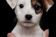Love Dogs / by Dana M.