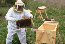 Bees Top Bar etc. / Bees