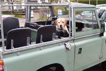 Defender Dog / Land Rover