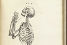 anatomy / by David Cook