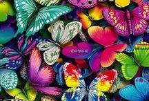 Beautiful Butterflies and Moths / Butterflies and moths.